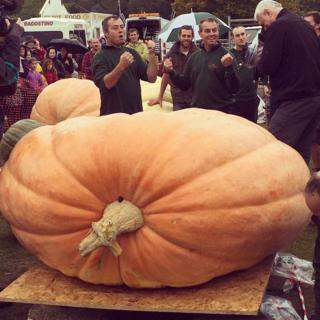 Pumpkin weighing