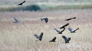 Sizewell: RSPB Minsmere nature reserve fears 'environmental impact' on natural world thumbnail