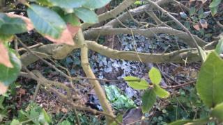A wasps nest near Amherst School.