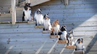 Dogs on steps