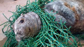 Seal in nets