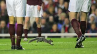 Squirrel on pitch during champions league