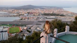 A monkey on the Rock of Gibraltar