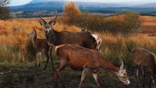 Deer in foreground of Rannoch moor
