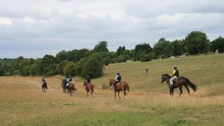 Racehorses on Epsom Downs