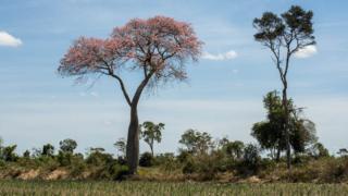 árboles en la colonia