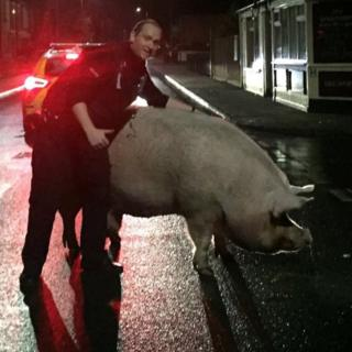 Pog the pig and Pc Brunning