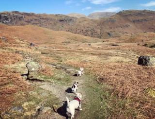 Dogs walking over fields