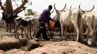 A Fulani herdsman waters his cattle on a dusty plain in May 2015.