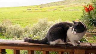 मारिया की बिल्ली