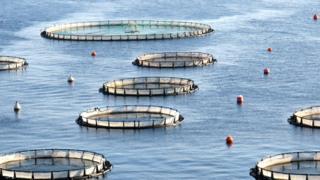 fish farming generic