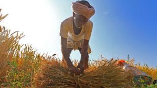 Famer in wheat field