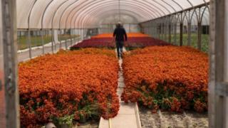 environment Garden centres in England and Wales are set to reopen