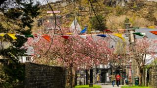 Blossom trees surrounding tents