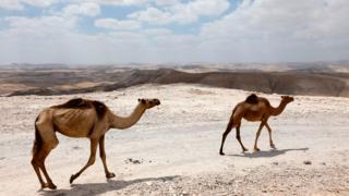 kamile
