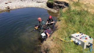 Técnicos resgatam peixes