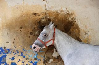 Un caballo ante una pared con hoyos de bala en el hipódromo de Beirut, Líbano.