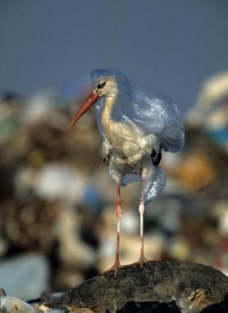 Foto John Cancalosi tentang seekor bangau yang terperangkap dalam plastik muncul kembali pada tahun 2018 ketika National Geographic meluncurkan kampanye Planet atau Plastik?