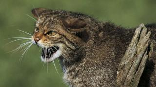 More than a quarter of UK mammals face extinction