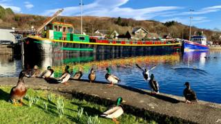 Ducks and a barge