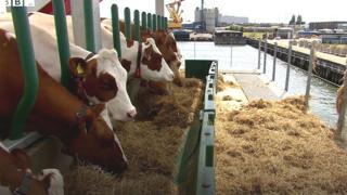 """في هولندا: أول """"مزرعة عائمة"""" في العالم"""