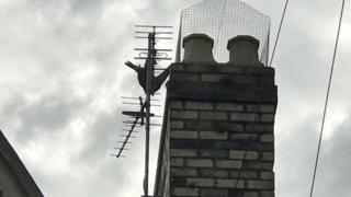 The peregrine falcon hanging upside down from a television aerial