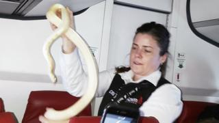 змія в літаку