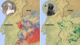 Spanish research map of vulture travels