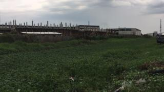 Water hyacinth as e cover di Osapa London canal