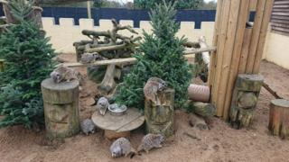 Meerkats at the owl sanctuary