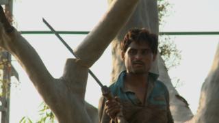 لاہور درختوں کی کٹائی