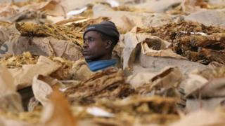 A Zimbabwean communal farmer looks on during the close of the 2016 selling season at Tobacco Auction Floors in Harare August 23,2016