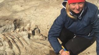 Archaeologist excavates whale bones