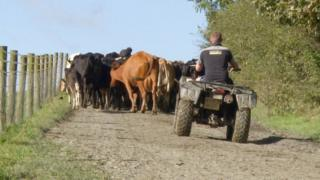 Photo of young farmer herding cows
