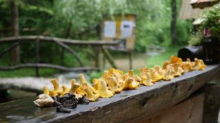 Mushrooms at the Zelenkovac Eco Zone