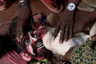 Cockrel held against a mask