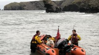 A sheep on an RNLI life boat with 3 crew members