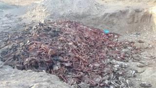 보츠와나의 고기와 가죽이 제거된 당나귀 시체 더미