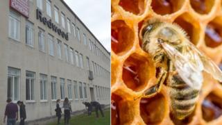 Students outside the Redwood Building Cardiff and a bee