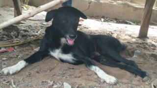 કૂતરાએ બાળકને જમીન ખોદીને બચાવ્યું