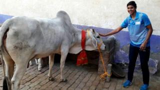 गाय के साथ बॉक्सर साक्षी
