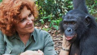 bonobo, orca, paus, perempuan