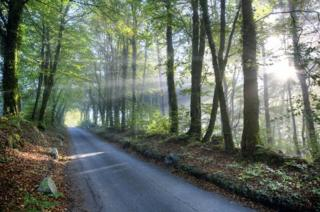 Light coming through trees