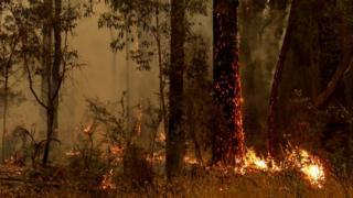 A small spot fire burns on a tree trunk in a forest in Australia