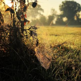 A spiders web in morning light