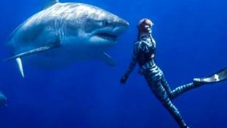 التقطت مصورة صورا لما يعتقد أنها أكبر سمكة قرش بيضاء على الإطلاق. وكانت المصورة كبيمبرلي جيفريز تأمل في تصوير كائنات تقتات على جثث الحيتان، قرب هاواي ولكن مفاجأة كانت في انتظارها.