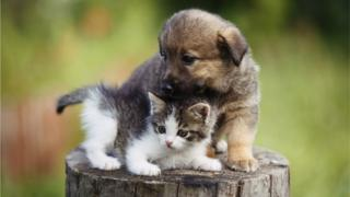 Kitten and Puppu