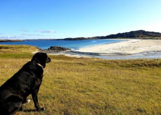 dog Lachie looking over the sand on the Isle of Lewis