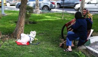 گرداندن سگ در فضاهای سبز تهران
