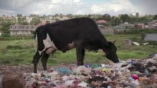 چهار سال زندان برای استفاده از کیسه پلاستیکی در کنیا